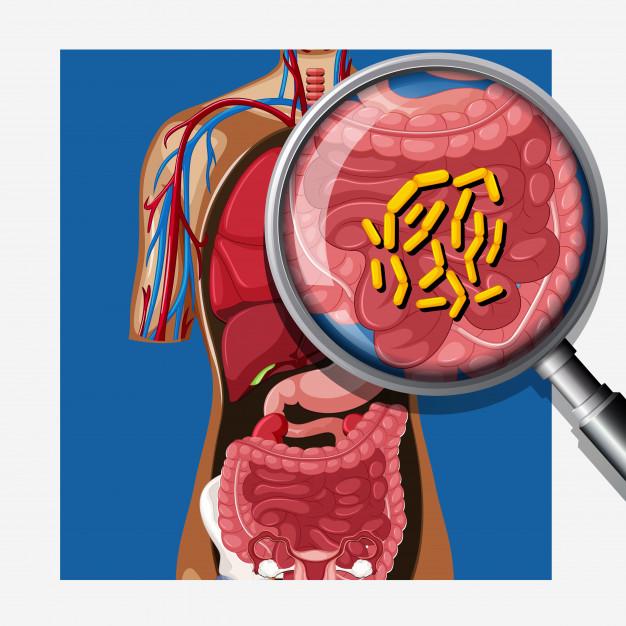 La flore intestinale continue d'intéresser les scientifiques. Des chercheurs viennent de montrer que la flore intestinale de jeunes souffrant d'obésité était différente de celle d'enfants et adolescents minces.