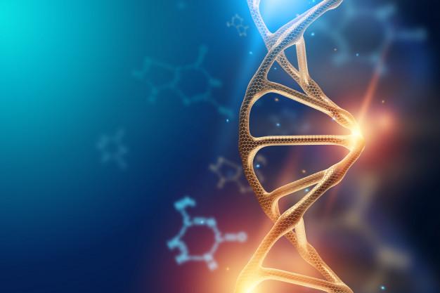 Selon une étude conduite par des chercheurs de l'Hôpital général de Chongqing en Chine, des mutations dans le gène MC4R (récepteur de la mélanocortine) seraient associées à un risque plus élevé d'obésité, y compris chez des individus ayant un mode de vie sain.